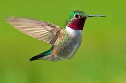 l'algorithme google prend le nom de colibri (Institut du contenu)
