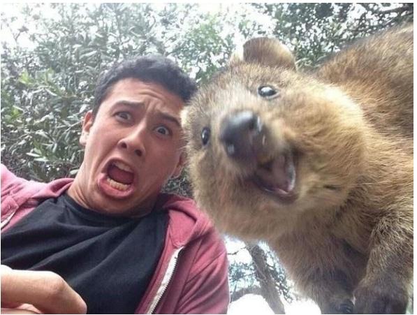 selfie avec quokka (content marketing institut)