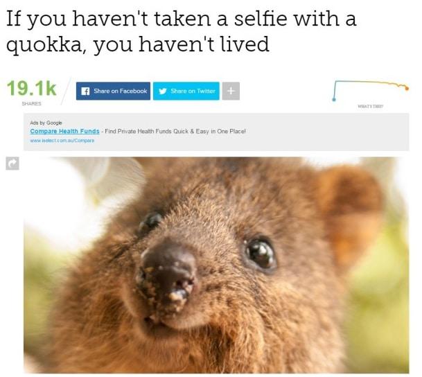 Faites un selfie avec un quokka